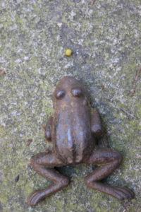 Gesunde Erbsen mit Frosch 2